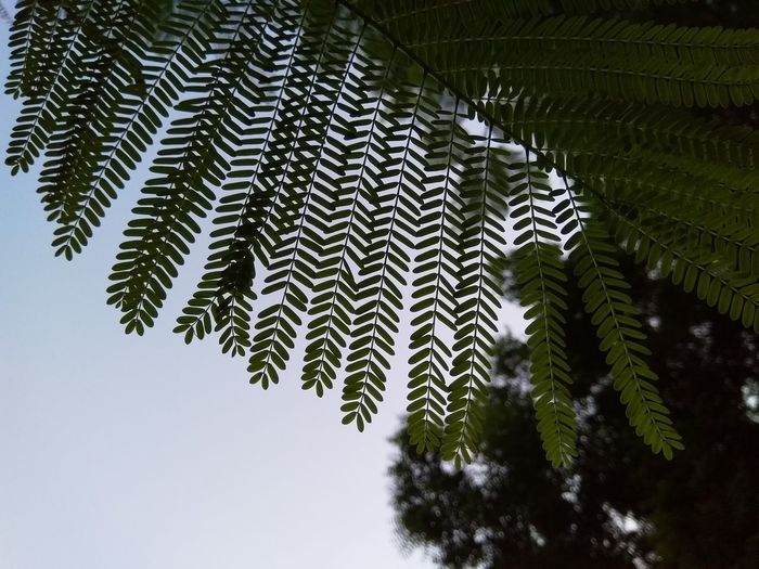 Low angle view of leaves on tree branch against sky