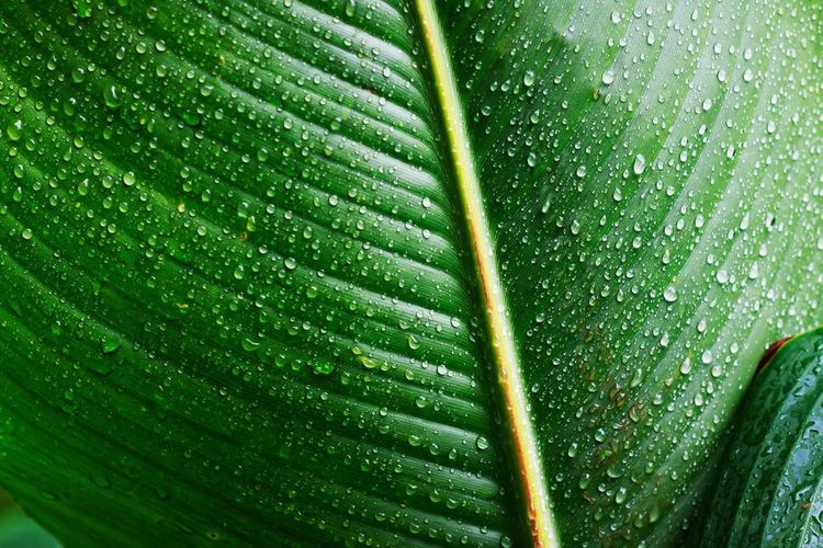 Full Frame Backgrounds Close-up Green Color Plant Nature Macro Leaf Growth Outdoors First Eyeem Photo