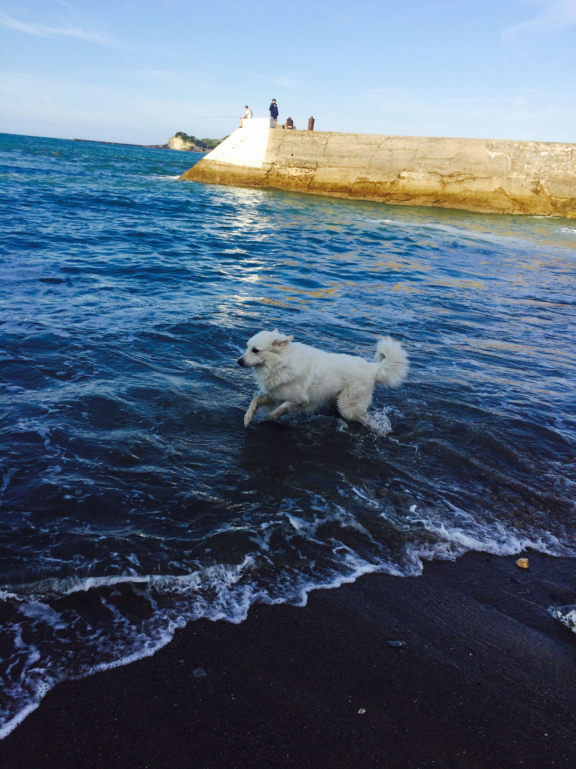 water, animal themes, sea, one animal, dog, mammal, pets, domestic animals, beach, seagull, animals in the wild, wildlife, bird, nature, blue, sky, wave, shore, swimming, rippled