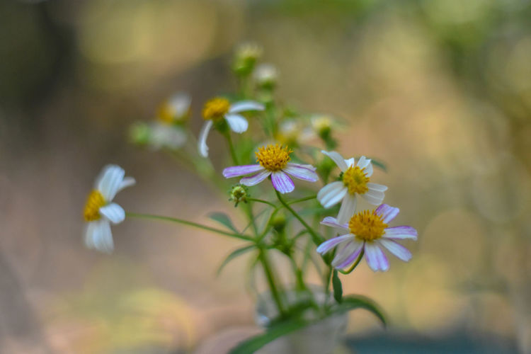Flower Head Flower Defocused Multi Colored Uncultivated Close-up Plant Plant Life Wildflower