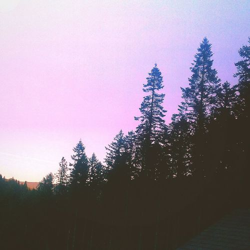 I took this from my roof lol ♥ Tree Forest Sunset Sky First Eyeem Photo
