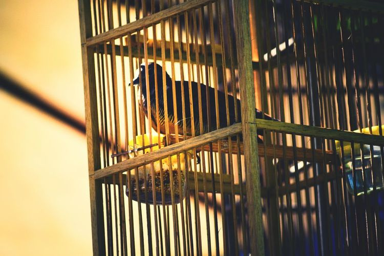 A cage is so powerful yet so innocent. It never understands the being that it has inside. Animals In The Wild Animal Themes Animals In Captivity Animal Wildlife No People Nature Cage Trapped Bird Water Day Outdoors Mammal Sky EyeEm Best Shots Eye4photography  Bali, Indonesia Focus On Foreground