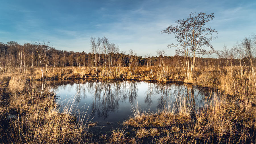 Sky Plant Tranquility Tranquil Scene Water Lake Tree Scenics - Nature Cloud - Sky Beauty In Nature Grass Nature Reflection No People Non-urban Scene Day Landscape Land Environment Outdoors Swamp Veluwe