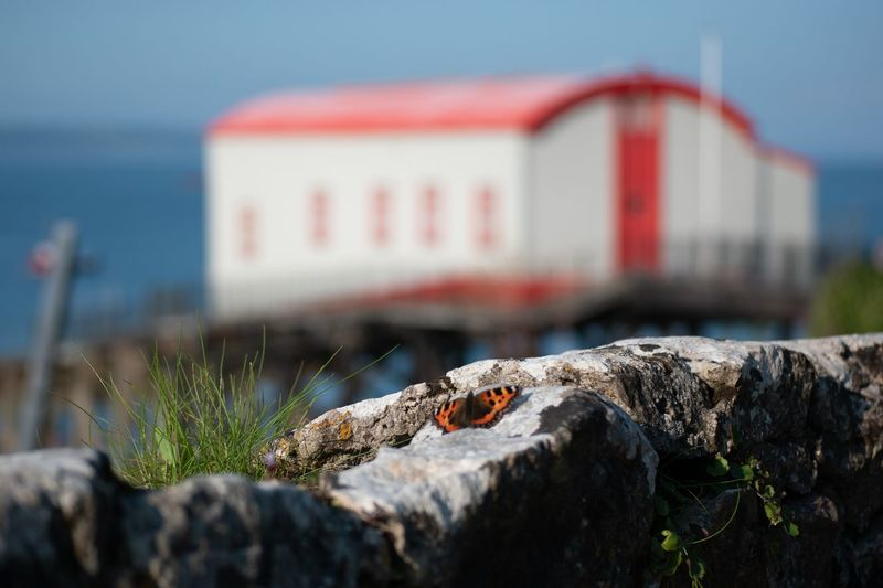 Close-up of crab on rock by sea against sky