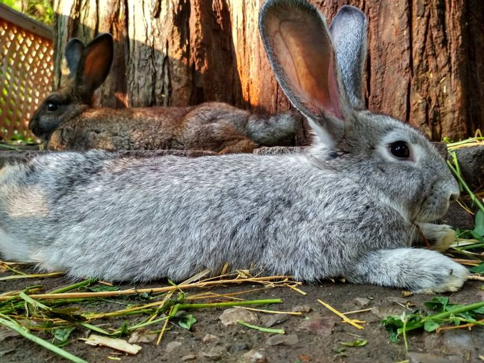 Rabbit 🐇 Day Nature Animal Themes Mammal Domestic Animals Close-up No People Outdoors Pets Relaxation