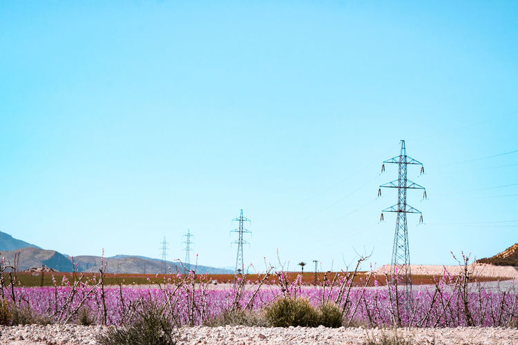 electrycity pylons and spring blossom Arid Climate Plantation SPAIN Springtime Civilization Progress Technology Flower Clear Sky Mountain Rural Scene Agriculture Blue Field Copy Space Sky Plant Electricity Pylon Power Cable Electricity  Electrical Grid Bulb Cable Fuel And Power Generation Electricity Tower Electric Pole Power Line  In Bloom Power Supply Blossom