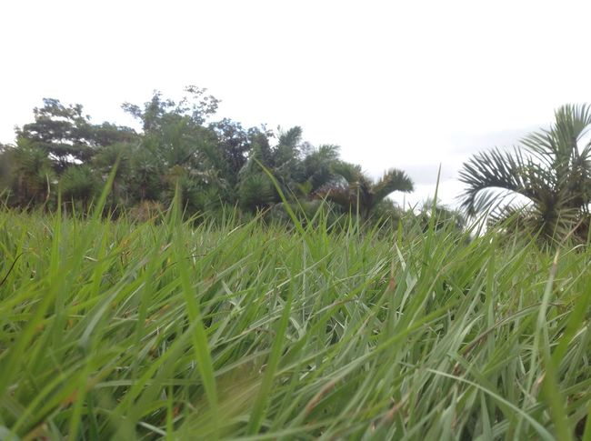 No People Growth Grass Nature Field Landscape Plant Outdoors Beauty In Nature Day Tree Sky Close-up