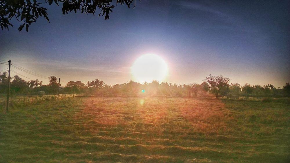 ย้อนแสง Sunbeam Sun Lens Flare Sunlight Field Outdoors Tree