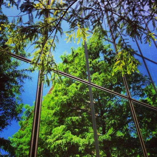 Sap filled trees reflected blue sky architecture beautiful green day