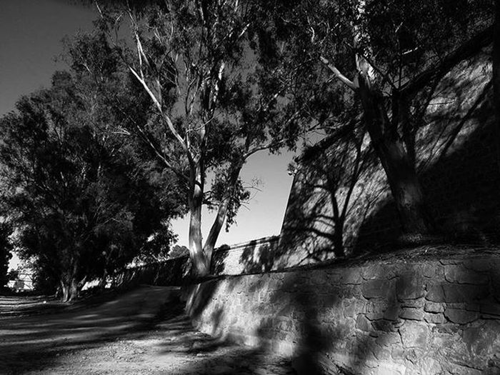 🌳 shadow ❤ Lastpostoftheday Trees Walls Sundown Shadows Bnw Blackandwhitephotography Blackandwhite
