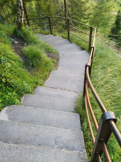 Railing Grass Steps Day The Way Forward Outdoors No People Growth Tranquility Nature Beauty In Nature Tree Escalera Green Color Suiza Grass Alpessuisses Switzerlandpictures Switzerland Alps Alpes