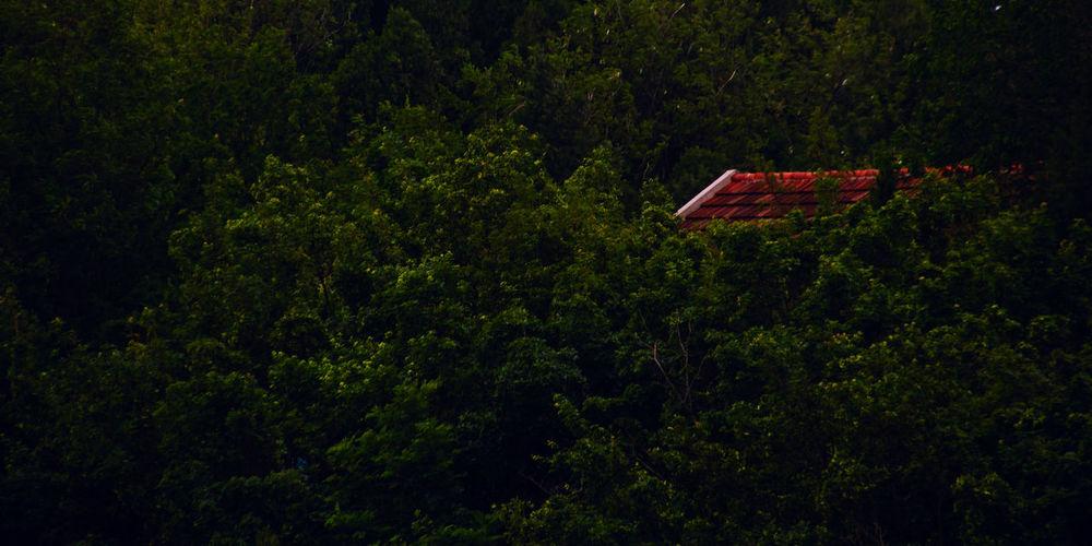 小屋一座,里面一呆,风林一脉,没有wifi。 roof Tree Green Color Nature No People Forest Roof House Outdoors