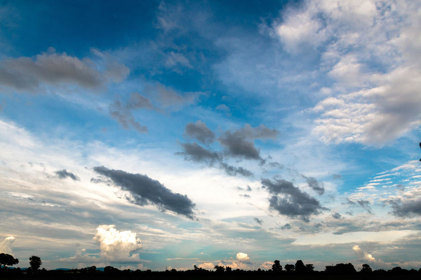 Silhouette of trees in the cloudy day. Background; Beauty; Black; Blue Sky; Cloudy; Colorful; Dusk; Evening; Field; Haze; Landscape; Meadow; Nature; Outdoors; Park; Shadow; Silhouette; Sky; Sunset; Tropical; Twilight; White Cloud;