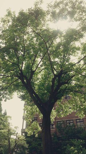 마음이 편해지는 나무 First Eyeem Photo, Tree
