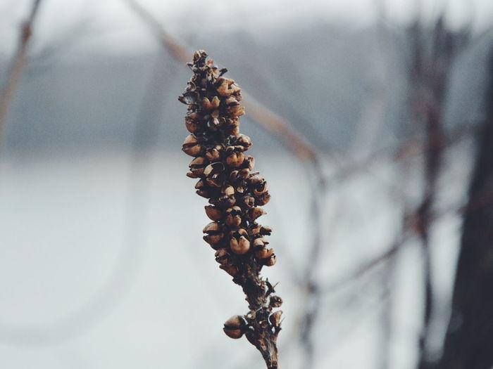Christmas Decoration Tree Winter Dried Food Close-up Wilted Plant Dead Plant Dried Plant Dried Plant Life