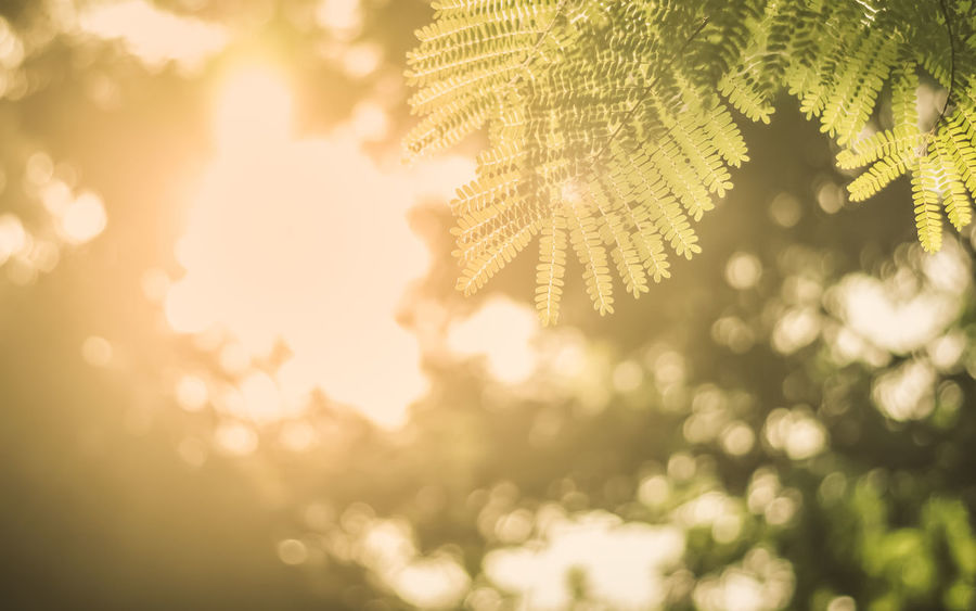 Beautiful green leaves with sunlight through tree, beautiful blurred background bokeh. Bright Freshness Green Light Nature Sunlight Sunny Tree Trees Background Beauty In Nature Blurred Background Bokeh Close-up Color Colorful Garden Leaf Leaves Season  Spring Summer Sun Sunrise Sunshine