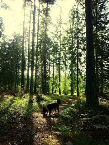 Min Hund Dog In The Forest