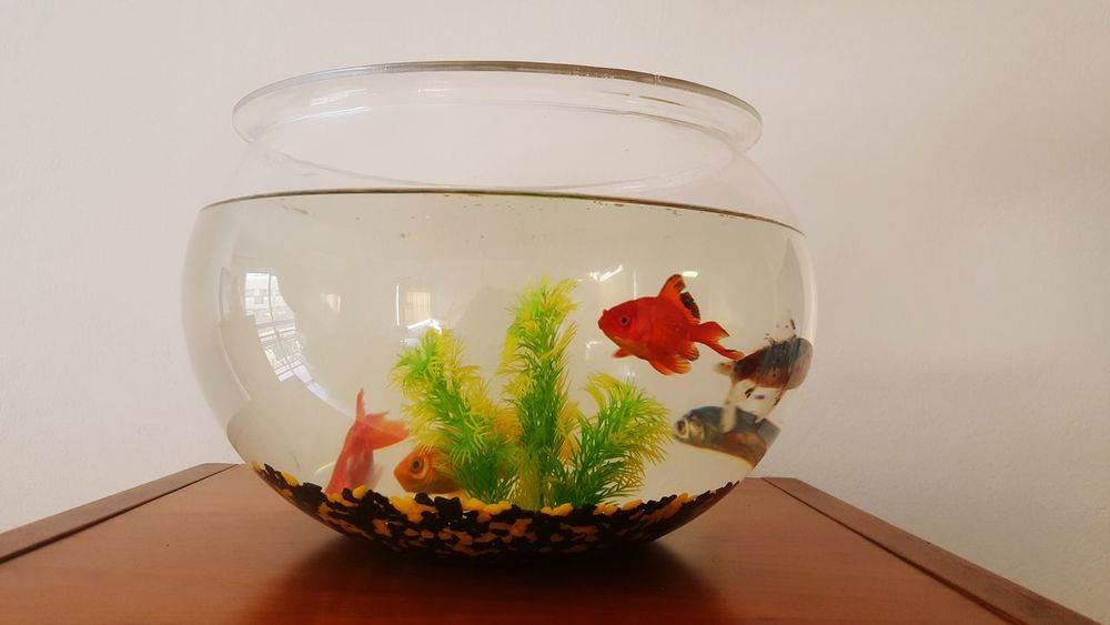 My babies 😊 Goldfish Fishbowl Pet Photography  Pet Check This Out Taking Photos Hello World