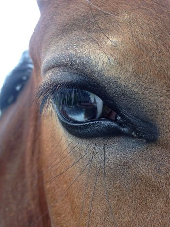 Wall eye Blue Eyes Horse Eyeshot Equine Equinephotography Equines Of Eye Em