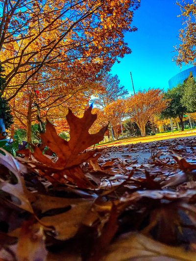 Perspective. Photos That Will Restore Your Faith In Humanity Sunlight Exploring New Ground Share Your Adventure Showcase: December Fall Days Beautiful Day Fall Foliage Autumn Colors Autumn Leaves Make Magic Happen How Do You See Climate Change? Color Explosion Life In Motion