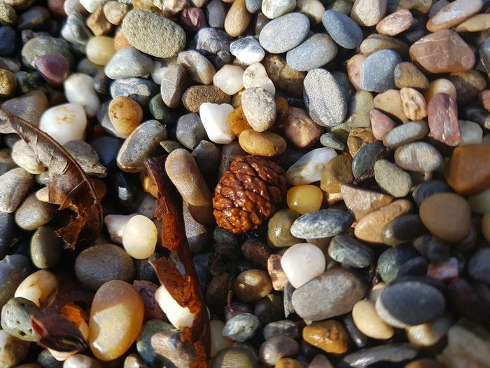 EyeEm Selects Full Frame Backgrounds Large Group Of Objects Abundance Pebble No People Nature Seashell Close-up Textured  Variation Beach Day Beauty In Nature Pebble Beach Outdoors