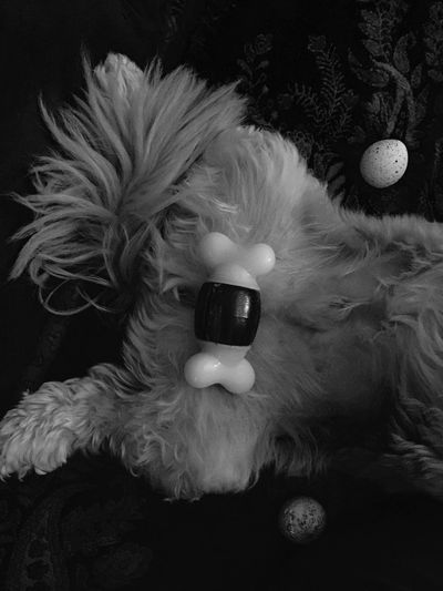 Balls Humor I Adore My Dog Don't Take Myself Too Seriously! Taking Photos Pain Posing