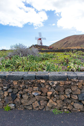 Typical landscape scene on anzarote island showing windmill and succulents Canary Islands Landscape Photography Lanzarote Lanzarote Island Mediterranean  SPAIN Succulents Windmill Landscape Succulent Plant