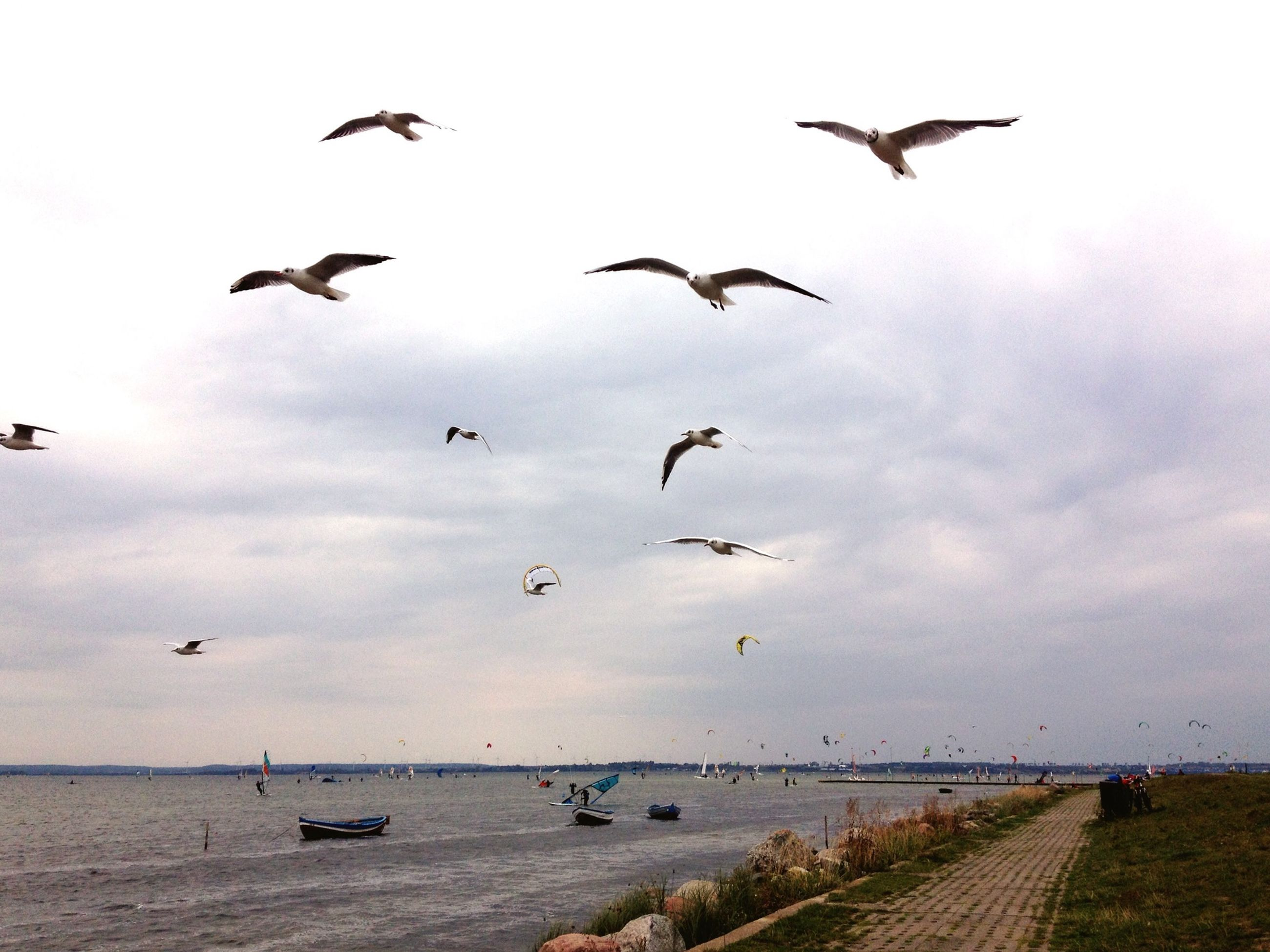 bird, animal themes, animals in the wild, flying, wildlife, sea, seagull, flock of birds, sky, water, horizon over water, beach, cloud - sky, nature, spread wings, medium group of animals, beauty in nature, shore, cloudy