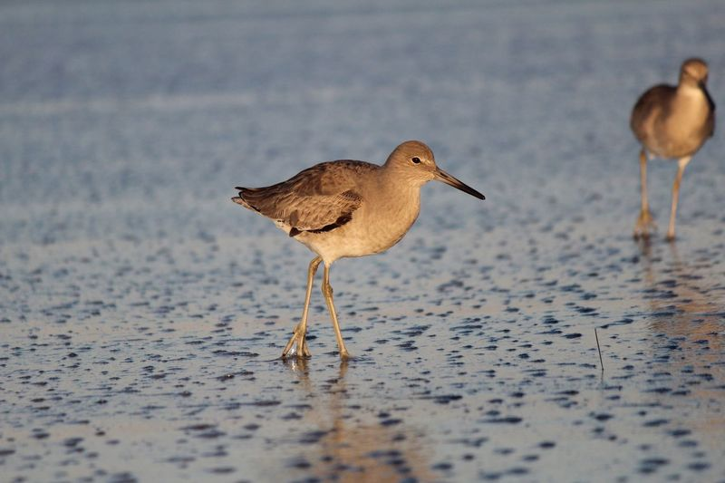 Bird Animal Themes Animal Animal Wildlife Animals In The Wild Vertebrate Water One Animal Nature No People Outdoors Reflection Selective Focus Side View Land Day Full Length Beach