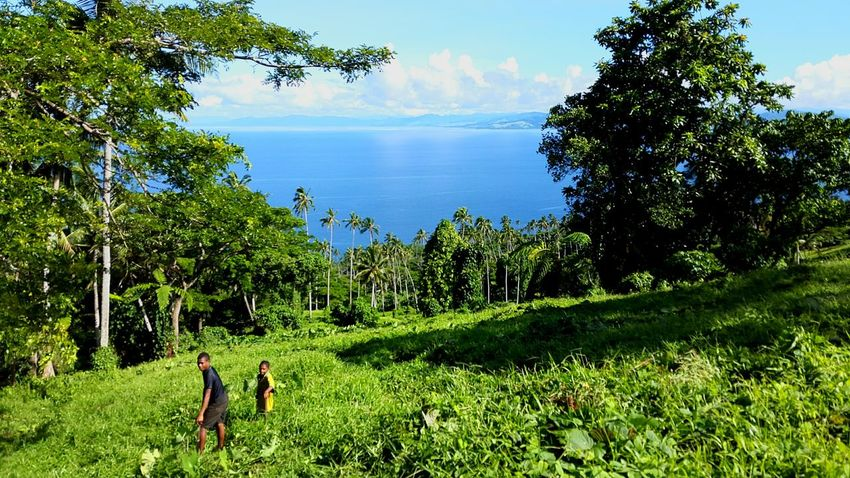 Islandlife Ocean Scene Estate Life Taveuni Island Fijiislands Jungle Farm