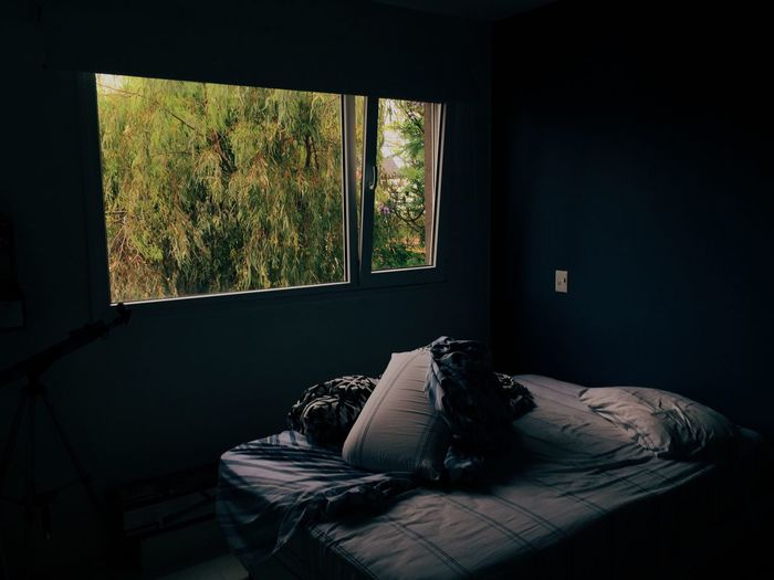 Window Sunlight Home Interior Indoors  Tree Curtain Bed Bedroom No People Day Domestic Room