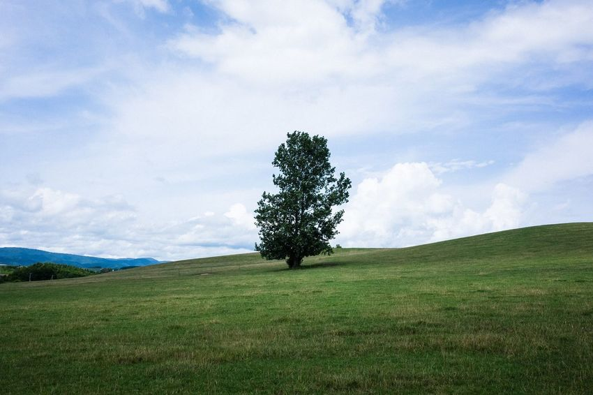 Nature Sky Landscape Tree Field Grass Plant Land Growth Environment Beauty In Nature No People Green Color Single Tree Non-urban Scene Cloud - Sky Scenics - Nature Tranquil Scene Tranquility Day Outdoors Rolling Landscape Isolated