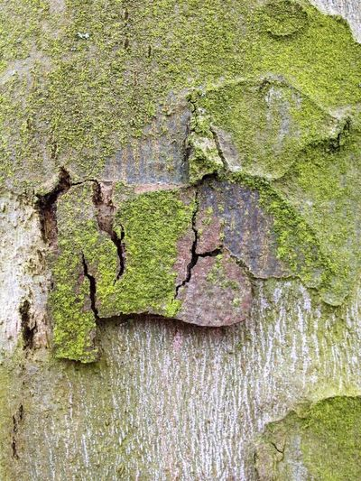 Nature Trees Moss & Lichen Beautiful Bark