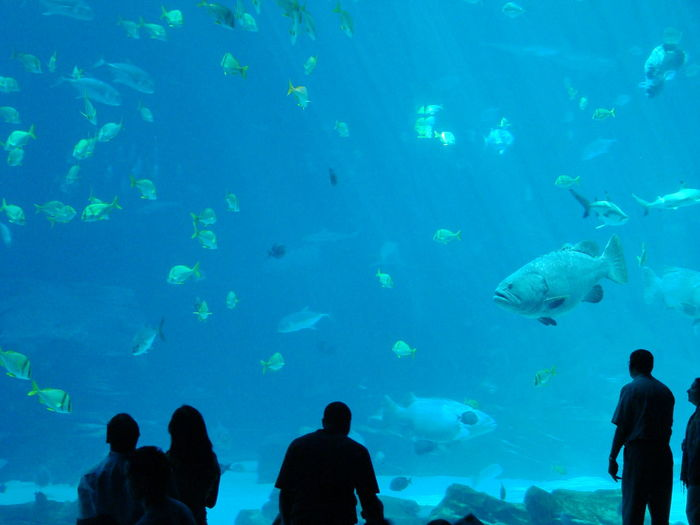 People Watching Fish Swimming At Aquarium