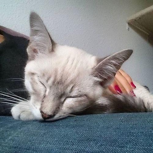 Die vier Katzenkinder wurden heute kastriert, jetzt hängen sie alle noch in den Seilen 🙀 Blanco_the_cat Schlafendetiere_tsez