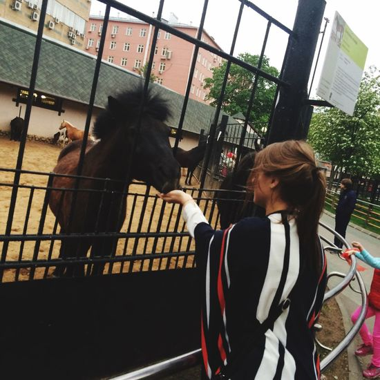Zoo зоопарк 🐴 VSCO EyeEm Gallery EyeEm Animal Lover
