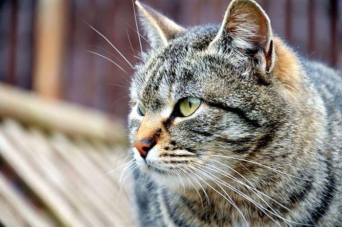 The EyeEm Facebook Cover Challenge Cat Popular Photos Nice
