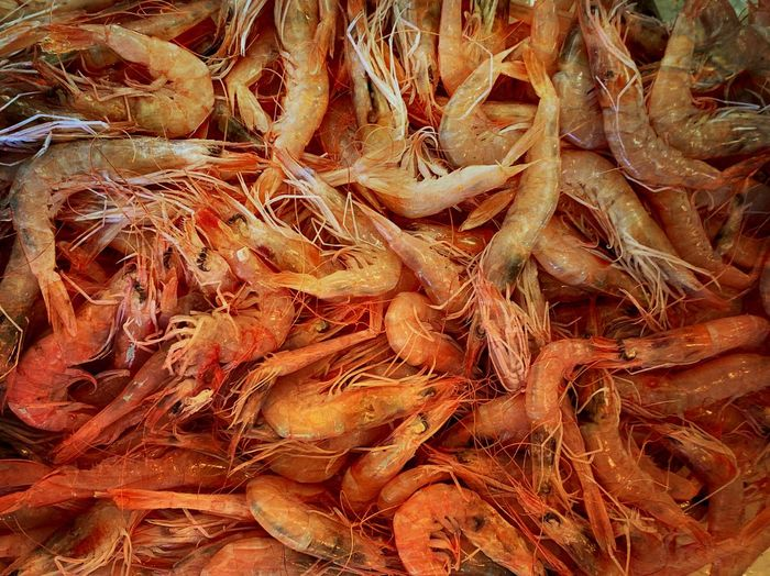 Shrimps Prawn Prawns Full Frame Backgrounds No People Day Nature Plant Land High Angle View Dry Outdoors Root Abundance Pattern Close-up Plant Part Tree Food And Drink Wood - Material Field Food