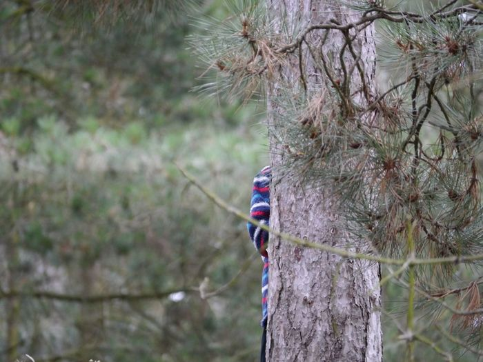 Wells-next-the-Sea Seaside 2015  Norfolk Uk Pinewoods Hide And Seek Boo! I Can See You Tree Having Fun Family