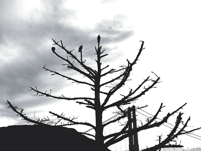 Q 😊Blackandwhite Photography Tree Of Life Darkness And Light 👍✌👍 Greyscale 2016😍 😄 Check This Out Perfect_shot Scenery Shots Beautiful Nature Taking Photos 🌲🍀🌺🌵 Black Forest Amazing_captures