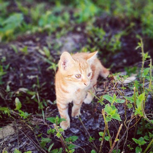 meow :3 First Eyeem Photo