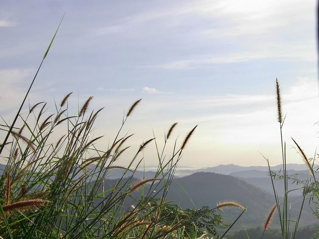 พุเตย Nature Tranquil Scene Mountain Beauty In Nature Tranquility Scenics Growth Plant Sky Outdoors Mountain Range No People Day Water Foreground Grass