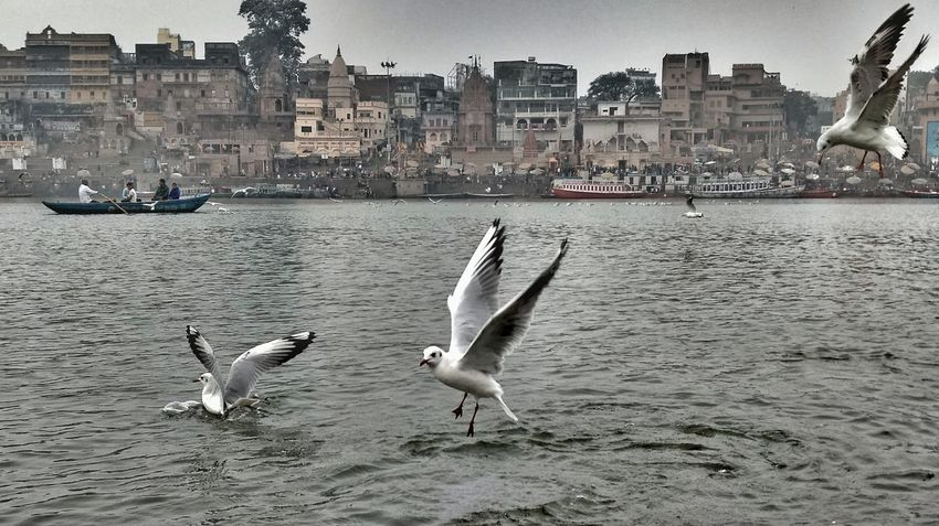 One day morning I experienced watching the Siberians Flying Peacefully while on a Boat Ride going Across The River Ganga . Birds Peace Chill Winter River Varanasi India EyeEm Best Shot Nature Peaceful Morning Beauty Snap Freedom Adapted To The City EyeEm Diversity The Great Outdoors - 2017 EyeEm Awards