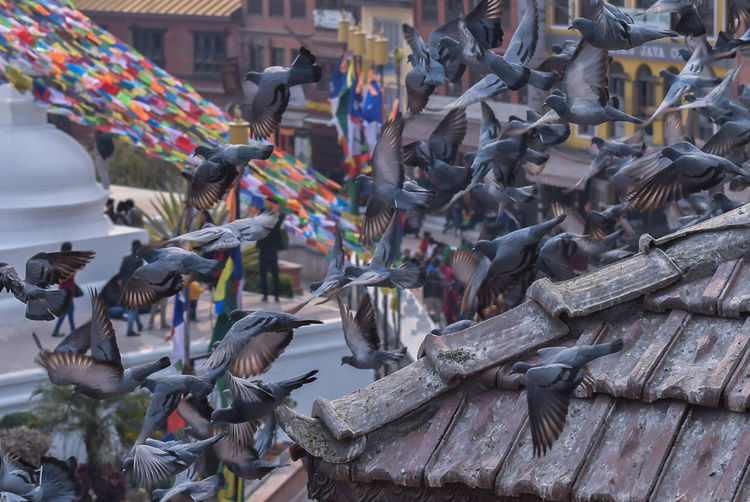 Multi pigeon pose Pegion #nepal #asia Bird Large Group Of Animals Animal Themes Outdoors Animals In The Wild Day Perching Spread Wings No People