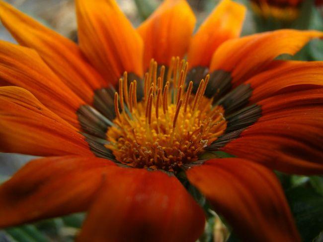 Macro Flowerlovers Macro_flower Flowers Yorange EyeEm Macro 🌷 Flowers 🌹 Macro Photography EyeEm Nature Lover Beautiful Nature