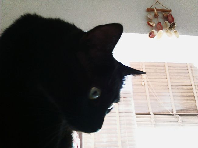 Catportrait Cat♡ Blackcatlove Blackcatsrule Blackcatsaregood Blackcatsclub Blackcatappreciation Mycat♥ Mycatsareawesome Mycatlovesme