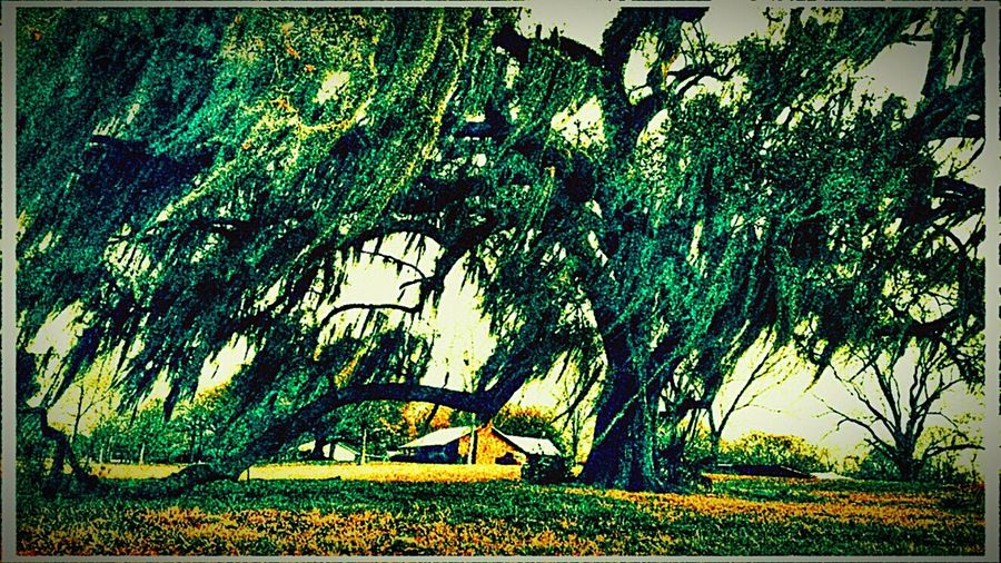 Country Life Country Life ...... (: Country Life & Love Peace And Quiet Old House Louisiana Landscape #Nature #photography Landscape_photography Landscape