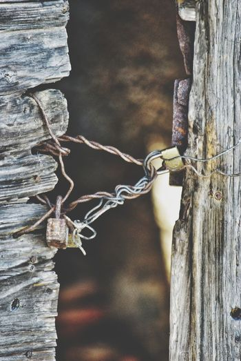 Close-up of padlock on wooden fence