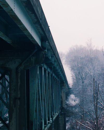 Into the fog. Fog Chasing Fog Bridge Trees Snow Snowy Lovefog