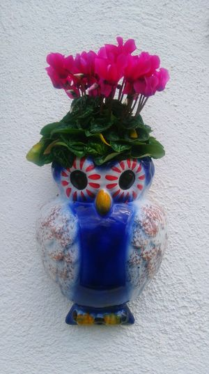 Yaya's garden, Part 1😍 Blue Fragility Flower Freshness Garden Photography Garden Garden Flowers Grandmas Garden Flowerporn Flowers Flowers,Plants & Garden Flower Porn Owl Fragility In Nature Porcelain Cup Porcelain